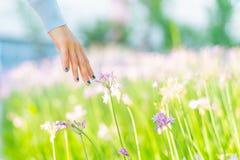 Mujeres y flores en el campo las mujeres dan el tacto de la flor púrpura con el espacio de la copia Foto de archivo libre de regalías