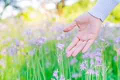 Mujeres y flores en el campo las mujeres dan el tacto de la flor púrpura con el espacio de la copia Foto de archivo