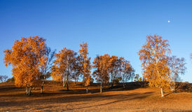 Mulan韦张在秋天 库存照片