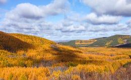 Mulan韦张在秋天 图库摄影