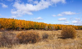 Mulan韦张在秋天 库存图片