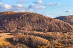 Mulan韦张在秋天 免版税库存图片