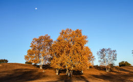 Mulan Wei Chang in autumn. Mulan Wei Chang is also called the royal hunting ground in Qing dynasty. Here is the Qing Dynasty, the emperor, nobles and eight Stock Image