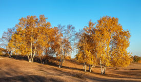 Mulan Wei Chang in autumn. Mulan Wei Chang is also called the royal hunting ground in Qing dynasty. Here is the Qing Dynasty, the emperor, nobles and eight Royalty Free Stock Photography