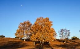 Mulan Wei Chang im Herbst Stockbild