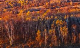 Mulan Wei Chang im Herbst Stockfotografie
