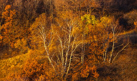 Mulan Wei Chang im Herbst Stockbilder