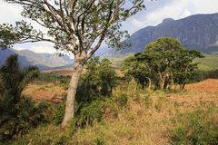 Mulanje Massif. The Mulanje Massif, also known as Mount Mulanje, is a large monadnock in southern Malawi only 65 km east of Blantyre, rising sharply from the royalty free stock photos