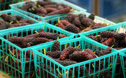 Mulberries Imagem de Stock Royalty Free