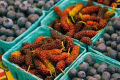 Mulberries e uvas-do-monte Imagem de Stock