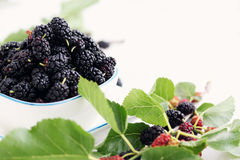 Mulberries Stock Image