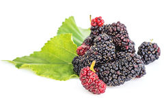 Mulberries with leaf isolated on white. Royalty Free Stock Image