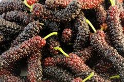 Mulberries persas imagens de stock