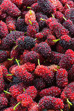 Mulberries piled Stock Photography