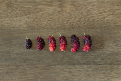 Mulberries placed in small to big order Stock Photo