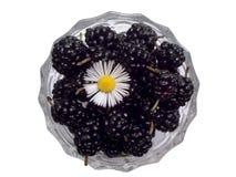 Mulberries pretos 2 foto de stock