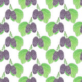 Mulberries. Seamless pattern with berries. Hand-drawn background. Vector illustration. Real watercolor drawing Stock Photos
