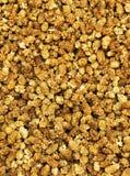 Mulberries secados Imagens de Stock Royalty Free