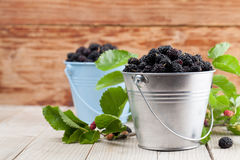 Mulberries in small buckets. Fresh black mulberries in a small buckets. Shallow dof Royalty Free Stock Photography