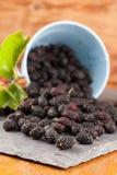 Mulberries split on a slate board. Black mulberries spilt on a slate board. Shallow dof stock photography