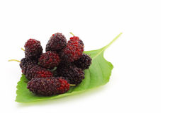 Mulberries on white background. Stock Photography