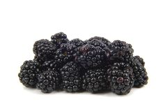 Mulberry Stock Image