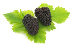 Mulberry Royalty Free Stock Photos