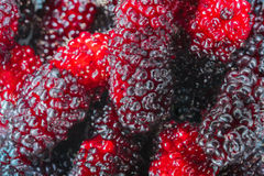 Mulberry. Background / fresh mulberries Stock Photography
