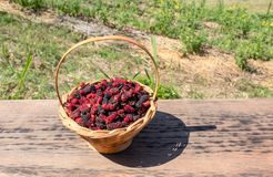 Mulberry in bamboo basket on a wooden floor stock image