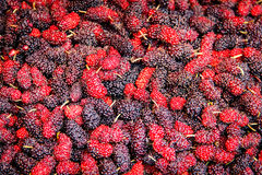 Mulberry berries background. The red and purple of Mulberry berries background Stock Images