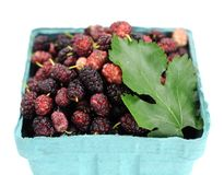 Mulberry berries Stock Photography