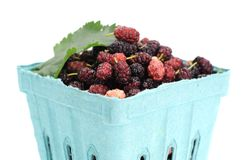 Mulberry berries Royalty Free Stock Images
