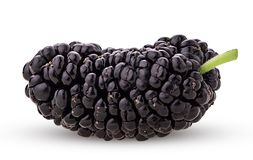Mulberry berry stock photography