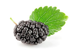 Mulberry berry with leaf isolated on white background macro Stock Image