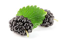 Mulberry berry with leaf isolated on white background macro Stock Photography