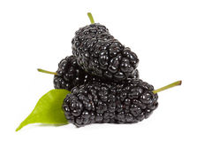 Mulberry Stock Photos
