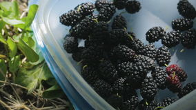 Mulberry in a box on the grass stock video footage