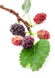 Mulberry on a branch with a leaf Stock Photography