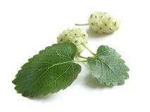 Mulberry branco (Morus alba) Imagens de Stock Royalty Free