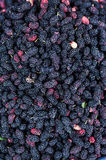 Mulberry. Bunch of tasty and coloured mulberry Stock Photography