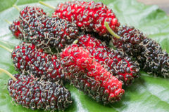Mulberry. Close up to Mulberry. fresh organic mulberry fruit. on mulberry leaf Royalty Free Stock Images