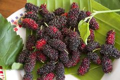 Mulberry fresh in Fruit tray. Pile of mulberry fresh in Fruit tray royalty free stock images