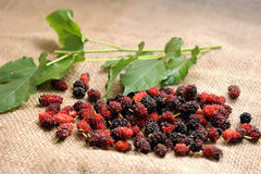 Mulberry fruit Royalty Free Stock Photos