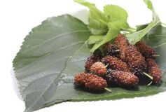 Mulberry fruit - On white background - Food Fruit - for health as a medicinal herb - Raising worms to produce silk