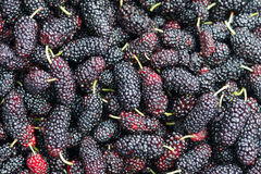 Mulberry fruits Stock Photo