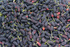 Mulberry fruits Stock Image