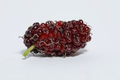 Juicy mulberry fruit Morus indica on white background. Mulberry fruits are nutritious, juicy, sweet, sourish and known for its antioxidant values. It contains Royalty Free Stock Photo