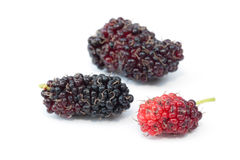 Mulberry fruits Stock Images