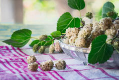 Mulberry fruits. White Fruiting Mulberry Morus alba. The white mulberry is widely cultivated to feed the silkworms employed in the commercial production of silk Royalty Free Stock Images