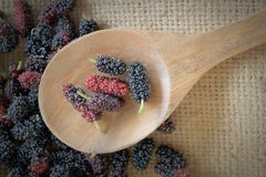 Mulberry fruits on wooden scoop Royalty Free Stock Image